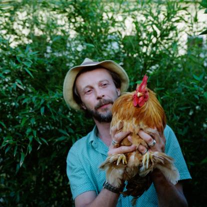 Comment sont élevés les poulets bio ? Source image : gettyimages