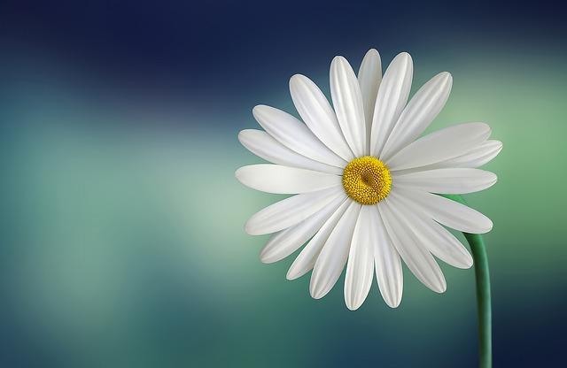 Cosmétique bio : 5 secrets de beauté