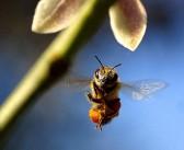 Pourquoi faire son propre miel bio ?