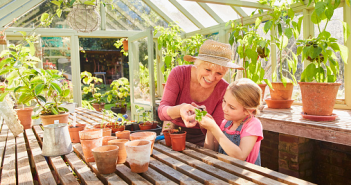 3 plantes incontournables pour soigner les maux du quotidien