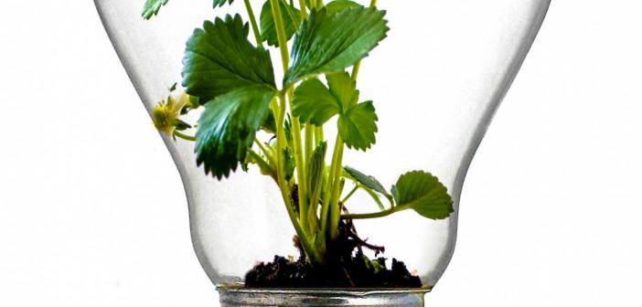 Le jardinage connecté pour une meilleure gestion des ressources
