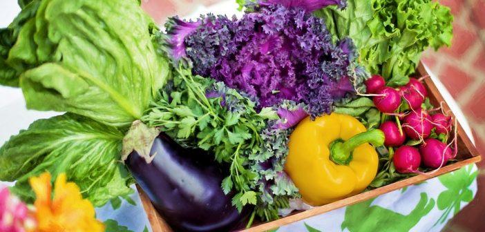 Jardin bio: 5 étapes pour s'y mettre
