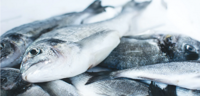 Comment bien choisir son poisson bio?